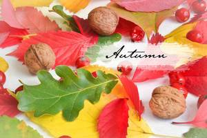 Autumn: Colourful leaves