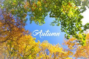 Autumn with colourful leaves