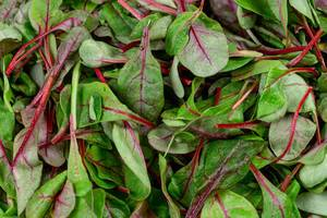 Background of fresh young spinach leaves (Flip 2020)