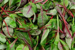 Background of fresh young spinach leaves