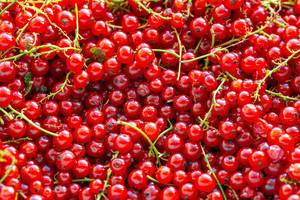 Background of ripe juicy red currant berries (Flip 2019) (Flip 2019)