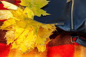 Backpack with autumn yellow maple leaves (Flip 2019)