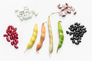 Beans and beans in pods of different varieties on a white background. Top view