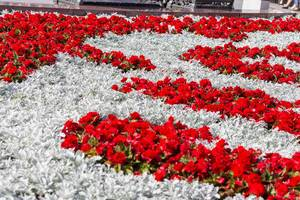 Beautiful flowers at theatre square in Moscow