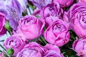 Beautiful violet eustoma background with water drops