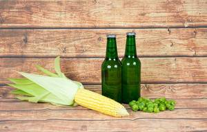 Beer bottles with hops and corn