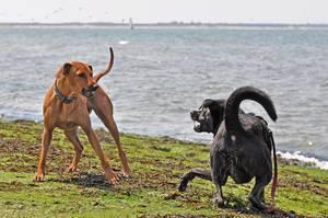 Bellende Hunde beißen nicht ;-)