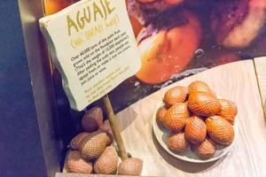Beschreibung von Aguaje / Buriti-Palme im Shedd Aquarium