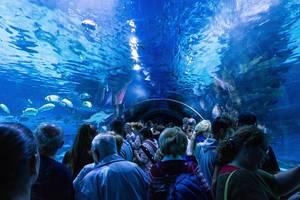 Besucher beobachten Fische aus Glastunnel im Aquarium im Tropicarium in Budapest
