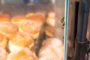 Bienen gefangen in der Krapfen-Vitrine