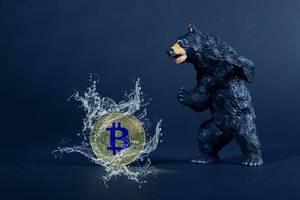 Big black bear with golden Bitcoin and water splash