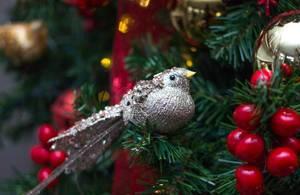Bird Christmas  ornement