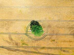 Bird eye view of patterns on wheat field with a tree in the middle / Vogelperspektive von Mustern auf Weizenfeld mit einem Baum in der Mitte