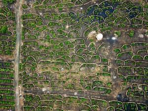 Bird eye view of winery fields with stone fences / Vogelperspektive von Weinkellereifeldern mit Steinz‰unen
