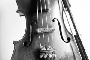 Black and white violin close-up