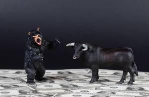 Black bear and bull standing on money