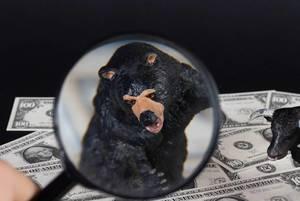 Black bear under magnifying glass