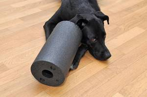 Black Labrador laying next to Blackroll on Wooden Floor