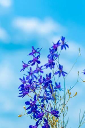 Blaue Rittersporn-Blumen vor dem hellblauen Himmel