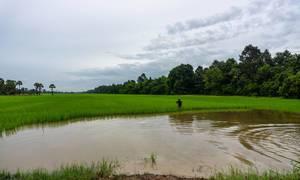 Blickwinkerl aus dem östlichen Baray mit einem Reisbauern stehend in einem Reisfeld in Siem Reap