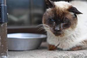 Blinde Katze sitzt neben ihrem Futternapf