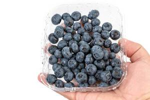 Blueberries in the plastic market box (Flip 2019)