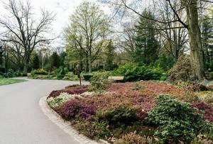 Blühende Landschaft und Blumenfeld auf dem Friedhof in Potsdam