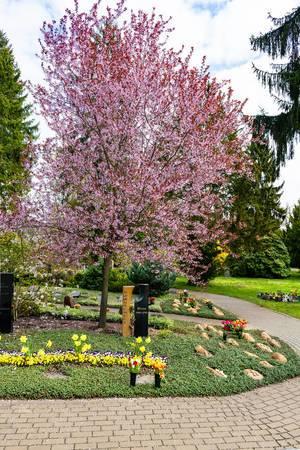 Blühender Kirschblütenbaum auf einem Grab neben zweifarbigem Grabstein im modernem Design auf dem Neuen Friedhof in Potsdam