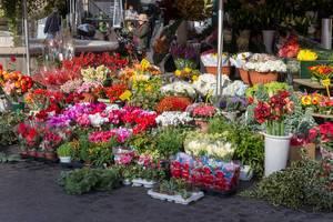 Blumen an einem Stand auf dem Markt in Rom