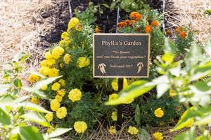 Blumen im Phyllis