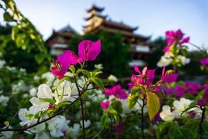 Blumen vor dem Chua Phap Hoa Pagoda Tempel in Saigon