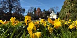 Blumenbeet im Mirabellgarten, Salzburg