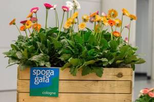Blumenkasten am Eingang zur Messe Spoga + Gafa in Köln