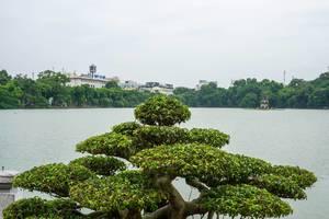 Bonsai mit Turle Tower im Hintergrund in Hanoi