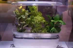 Bosch SmartGrow Gerät für Indoor Gardening mit automatischer Bewässerung und Beleuchtung