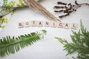 botanical letters with Plants in a background top view