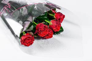 Bouquet of red roses on a white background (Flip 2019)