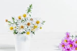 Bouquet of white daisies in a bucket