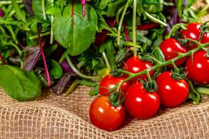 Branch of cherry tomatoes with rocket leaves, Basil and lettuce on the burlap (Flip 2019)