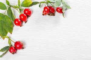 Branches rosehip with leaves on white background with free space (Flip 2019)