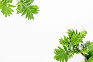 Branches with green leaves on a white background. Top view (Flip 2019)