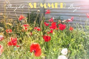Bright summer days / Rote Mohnblumen auf der Wiese