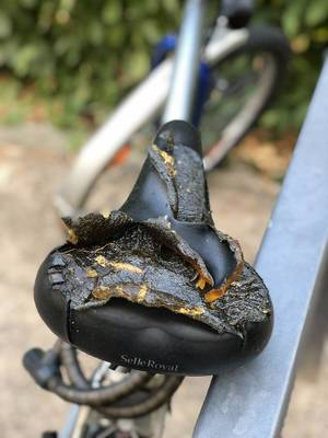 Broken, torn bicycle saddle