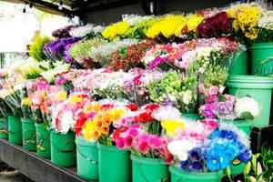 Buckets full of flowers in flower shop