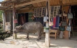 Buffalo in the Village Sapa .CR2 (Flip 2019)