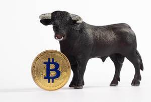 Bull with Bitcoin cryptocurrency on white background