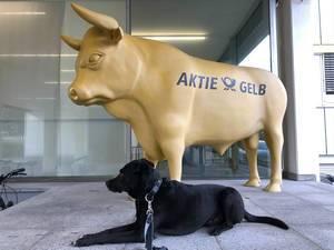 Bulldog - Aktienmarkt Bulle mit realem Hund nebendran