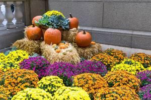 Bunte Halloween-Deko mit Kürbissen, Blumen und kleinen Heuballen in Chicago