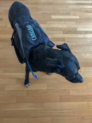 Camelbak Trinksystem auf dem Rücken eines Hunds