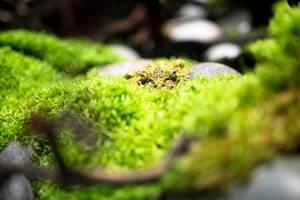 Camuflaged frog